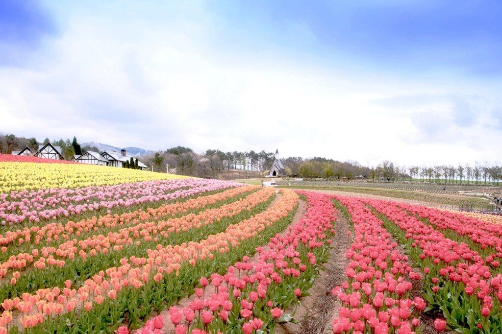 春色の高原 4