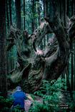 神秘の森 Ⅸ