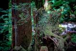 神秘の森 Ⅶ