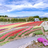 色彩の高原
