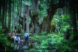 神秘の森 Ⅵ