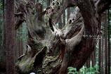 神秘の森 Ⅹ