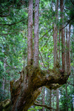 神秘の森 Ⅲ