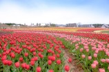 春色の高原 14