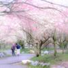 春色につつまれて