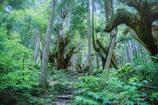 神秘の森 XVIII