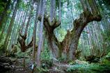 神秘の森 Ⅷ