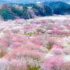 春彩の苑 Ⅱ
