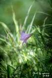 茂みに咲く