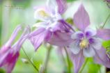 Flower in my garden Ⅰ