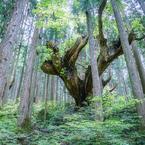 神秘の森 XX