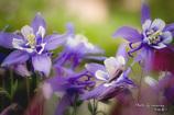 Flower in my garden Ⅲ