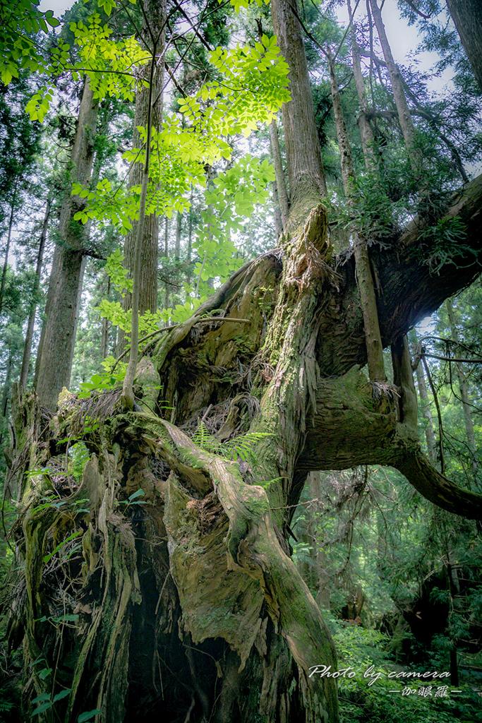 神秘の森 XVII
