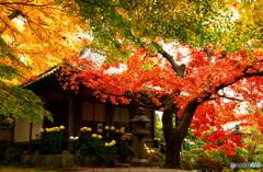 秋のパラソル