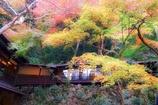 紅葉のある景色