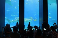 魚の見えるレストラン