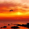 海の紅葉・・・