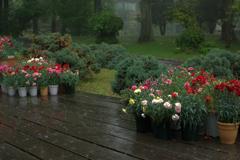 一人だけの植物園2