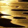 黄金の砂浜