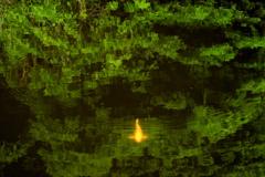 新緑に泳ぐ