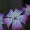 湘南の街の花