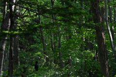 森と語らう