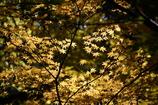 木洩れ日遊び1