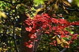 森の奥の紅葉2