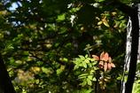 夏と秋の境目