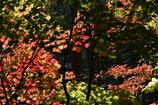森の奥の紅葉