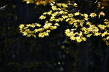 木洩れ日遊び2