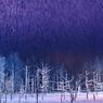 吹雪の青い池
