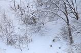 雪山で暮らす