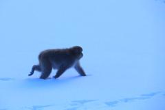 ライトブルーの雪原を行く