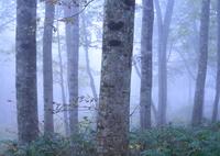 CANON Canon EOS 6Dで撮影した(霧に包まれて)の写真(画像)