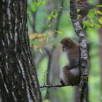 瞑想 ~初秋の森の中で~