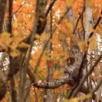 瞑想 ~錦秋の森の中で~