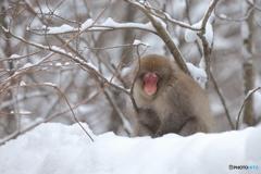 瞑想 ~白い雪の中で~