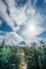 秋の雪歩道