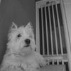 愛犬 Ten