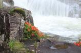 渓流と岩つつじ
