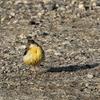 今日出会った鳥3