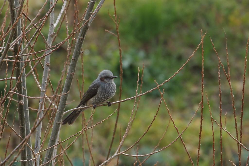 今日出会った鳥2