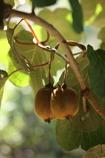 実りの秋3