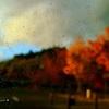 秋の移り気
