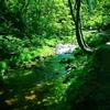 木漏れ日の渓流
