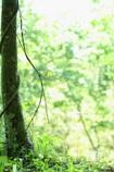 森のロープ