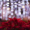 赤い蘭に光が降る