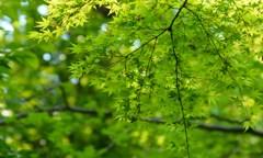 新緑の森で