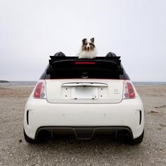 愛犬と海までドライブ